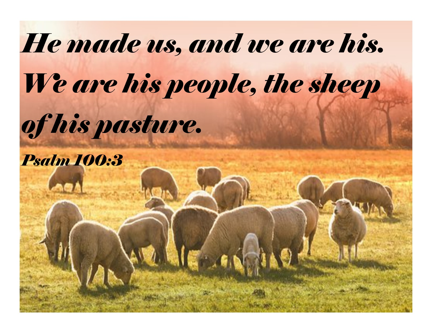 Qualities of Good Shepherds
